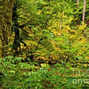 Mossy Rainforest Art Print
