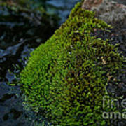 Mossy River Rock Art Print
