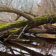 Mossy Tree Print by Ms Judi