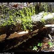 Mossy Waterfall On Mushroom Rock Art Print