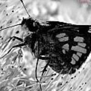 Moth One Art Print