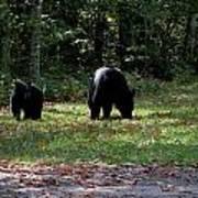 Mother Bear And Cub Art Print