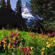 Mount Assiniboine Art Print