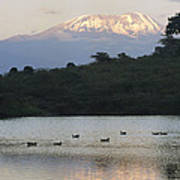 Mount Kilimanjaro Rises Above One Art Print