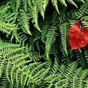 Mountain Bindweed And Fern Fronds Art Print