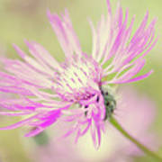 Mountain Cornflower Pink Art Print by