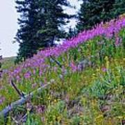 Mountain Flowers Art Print