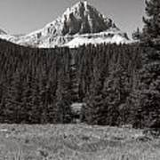 Mountain Peak Above The Tree Line Art Print
