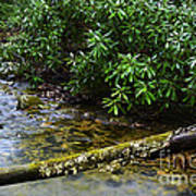 Mountain Stream And Rhododendron Art Print