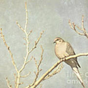 Mourning Dove In Winter Art Print