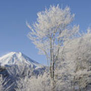 Mt Fuji And Frost-covered Trees Art Print