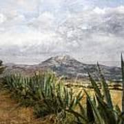 Mt Zeus Art Print
