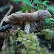 Mushroom Up Close 7046 1676 Art Print