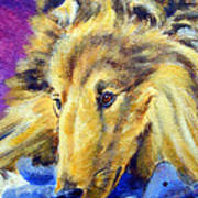 My Blue Teddy - Shetland Sheepdog Art Print by Lyn Cook