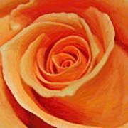 My Wonderful Rose Art Print
