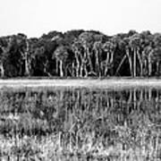 Myakka River Wilderness Art Print