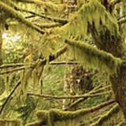 Mysterious Moss Art Print