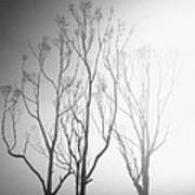 Mystic Trees 1 Art Print