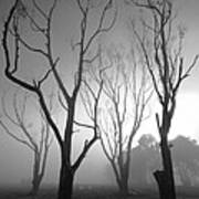 Mystic Trees 2 Art Print