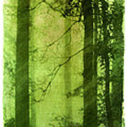 Mystical Glade Art Print