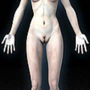 Naked Woman Art Print