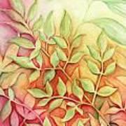 Nandina Leaves Art Print