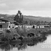 Napa River In Napa California Wine Country . Black And White Art Print