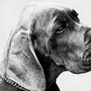 Napoleon Mischief Dog Portrait  Art Print
