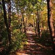Nature Trail Art Print