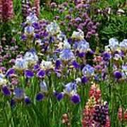 Natures Bouquet Art Print