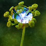 Nature's Diamond Ring Art Print