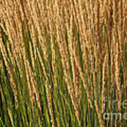 Nature's Own Gold Art Print