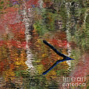 Nature's Reflections Art Print