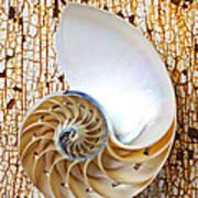 Nautilus Shell On Rusty Table Art Print