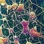 Nerve Cells, Sem Art Print
