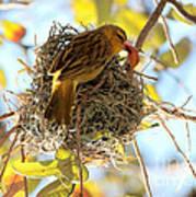 Nesting Instinct Art Print by Carol Groenen