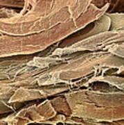 Neural Connective Tissue, Sem Art Print