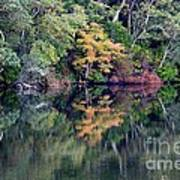 New England Fall Reflection Art Print