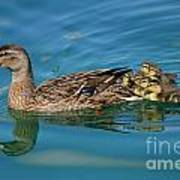 New Family Ducks Art Print