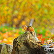New Hampshire Chipmunk Art Print