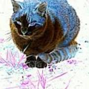 New Kitty Blue Art Print