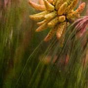 New Pines Cones In Spring  Art Print