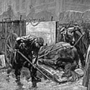 New York: Aspca, 1888 Art Print