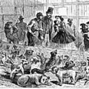 New York: Dog Pound, 1866 Art Print