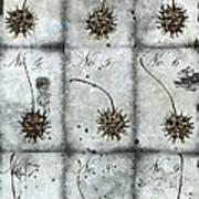 Nine Seed Pods Art Print