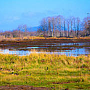 Nisqually Wildlife Refuge P5 Art Print