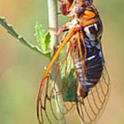 Noisy Cicada Art Print