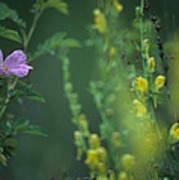 Nootka Rose And Yellow Toadflax Art Print