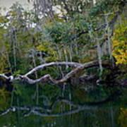 North Florida River Reflections Art Print