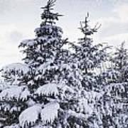 Northumberland, England Snow-covered Art Print